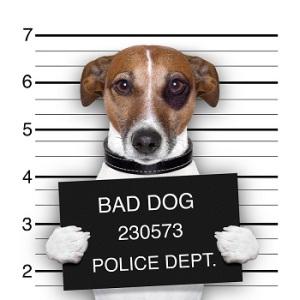 bigstock-Mugshot-Dog-44085748