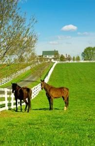 Kentucky Horse Ranch