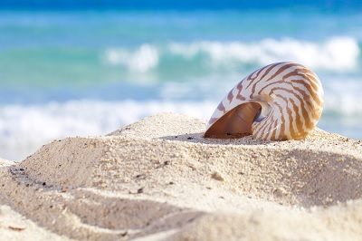 bigstock-nautilus-shell-on-a-beach-sand-18670310