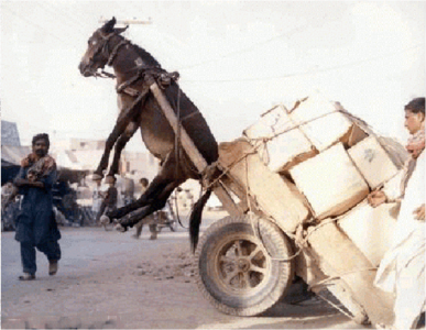 donkey-carried-by-the-cart